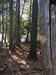 heart carved in tree in Door County, WI