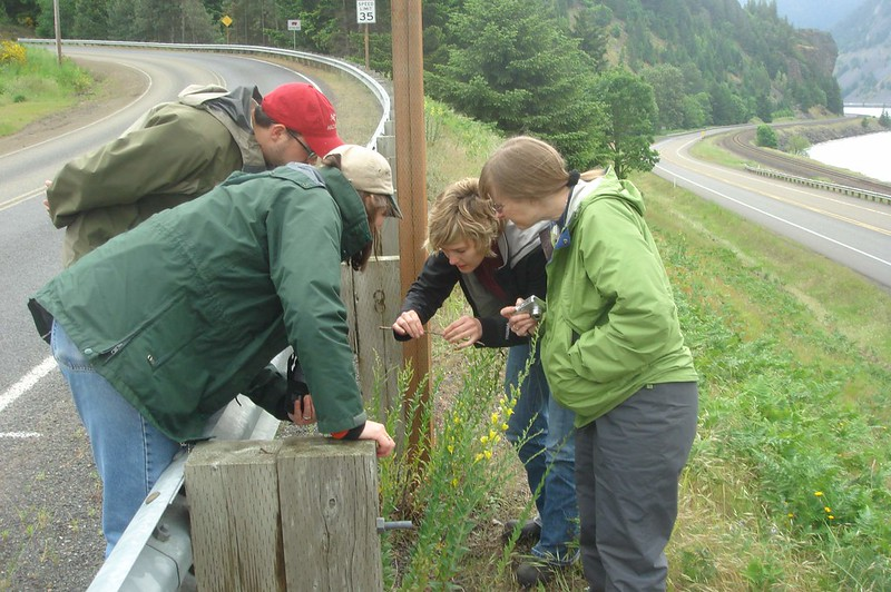 four people inspecting biocontrol results on invasive plant
