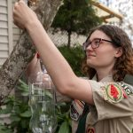 Eagle Scout sets plastic bottle on tree to collect invasive Asian giant hornet