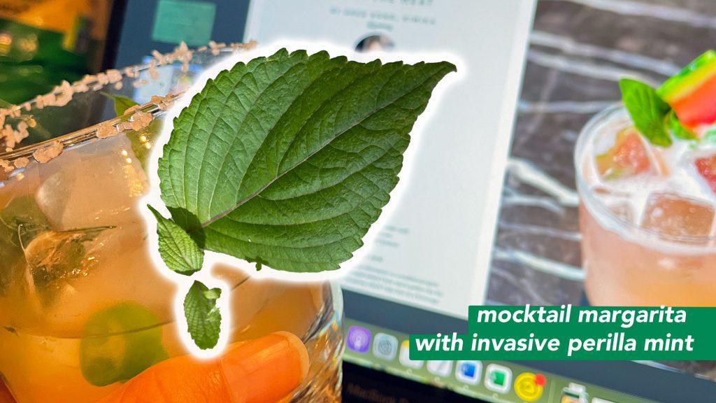 photo of mocktail margarita with perilla mint superimposed